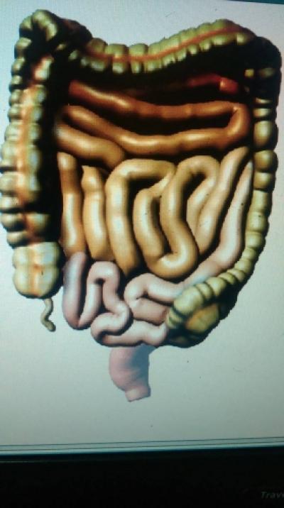 Intestinul sanatos/omul sanatos-medicina energo-informationala